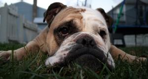 Photo of sad dog