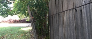 Fence falling down due to tree