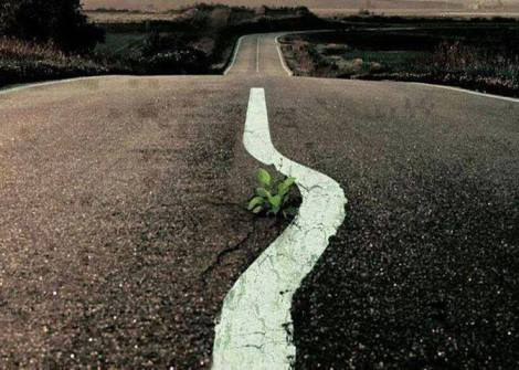 Plant in road